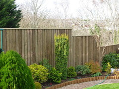 New feather edge fencing
